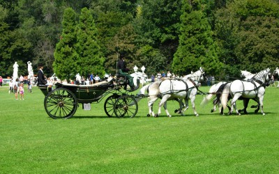 Esibizione al Parco Querini (Vicenza)