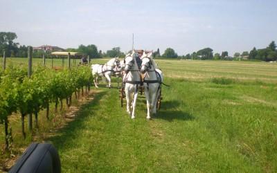 Gita a S.Daniele Del Friuli (UD)