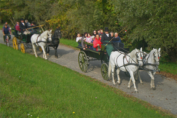 Cavalli e carrozze intorno a San Daniele del Friuli (UD)